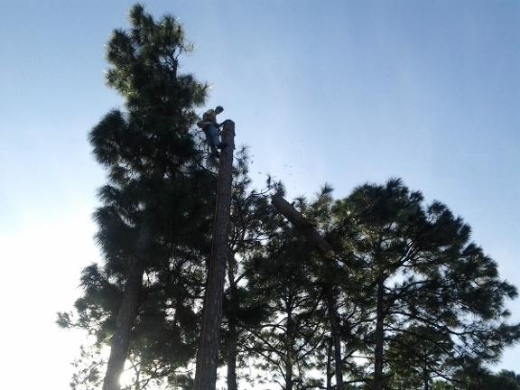 All Star Tree & Land Service