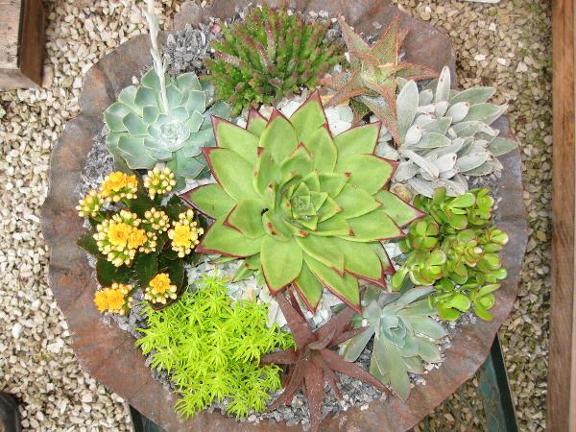 Hlavacek Victor Florist And Greenhouses