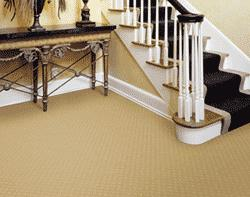 Potter's Carpet Cleaning