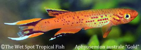 The wet spot tropical fish portland or 97213 for The wet spot tropical fish