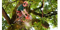 Beaver Creek Tree Service