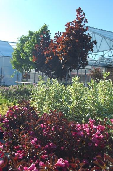 Fasel & Sons Garden Center